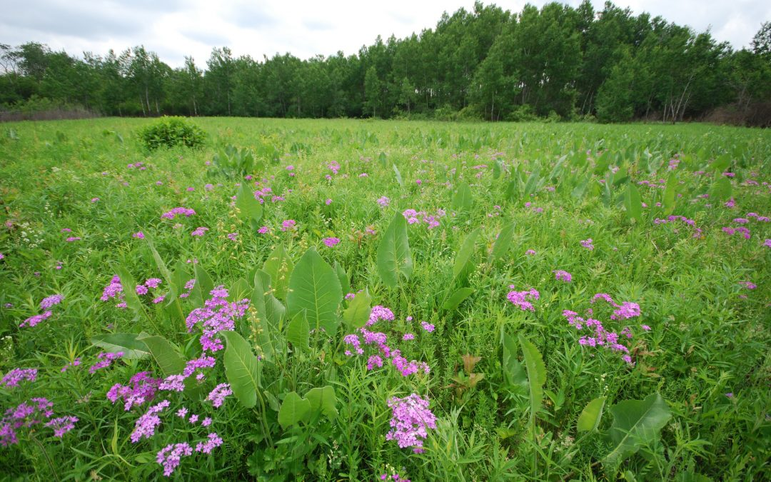 Setting Conservation Priorities for State Natural Areas