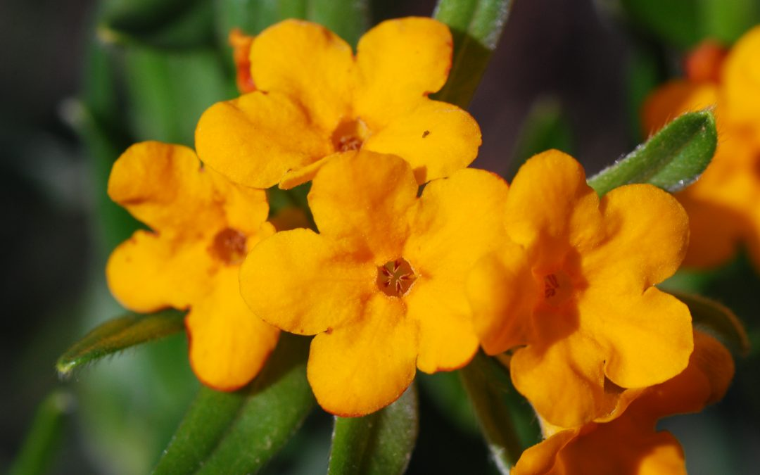 Celebrating a season of spring ephemerals on state natural areas