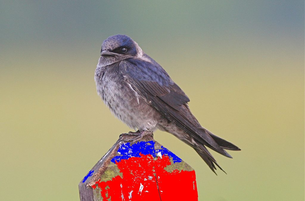 A home for purple martins on Memory Lake