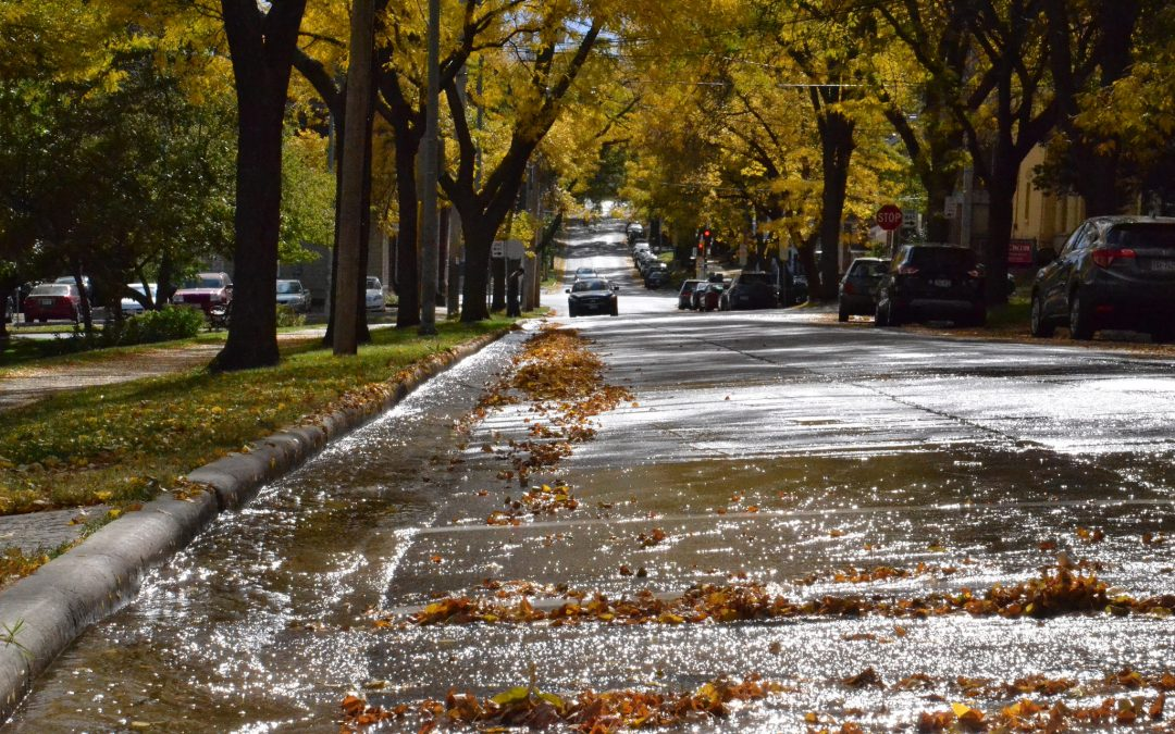 Keeping leaves (and nutrients!) out of our streets and lakes