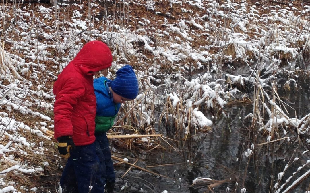 Managing wetlands on your property