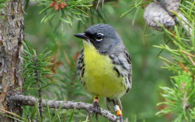 Funding Bird Conservation Efforts