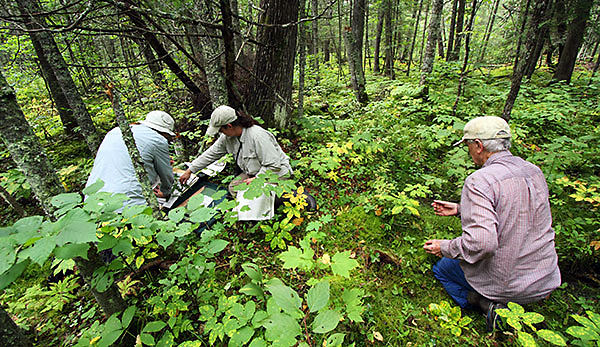 Study maps long-term impact of climate change on plants