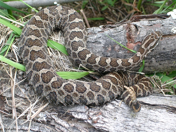 Protecting Snakes in Wisconsin