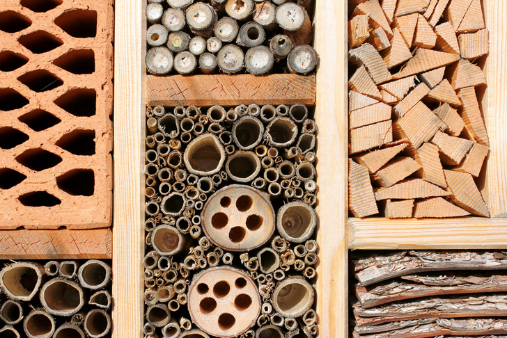 Building a home for insects