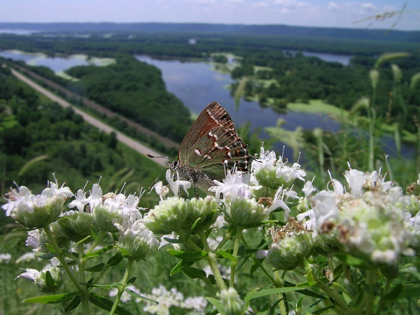 Fighting for Prairie at Battle Bluff State Natural Area