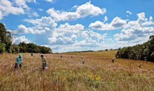 Muralt Bluff Prairie Seed Collecting By Jerry Newman