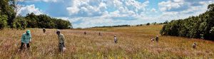 Muralt Bluff Prairie Seed Collecting By Jerry Newman Background