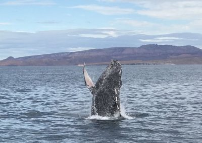 Photo of a gray whale from 2018 Baja trip with the Natural Resources Foundation of Wisconsin