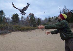 Releasing a raptor at Cedar Grove Ornithological Station. Photo by Cedar Grove Ornithological Station.