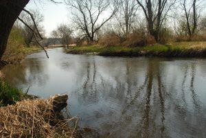 Sugar River SNA. Photo by Joshua Mayer.