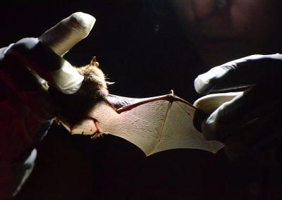 Wisconsin bats