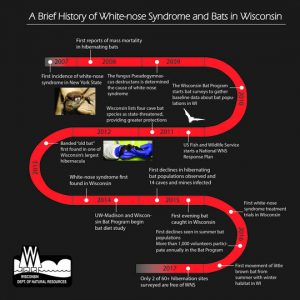 History of white-nose syndrome. Created by WDNR Bat Program.