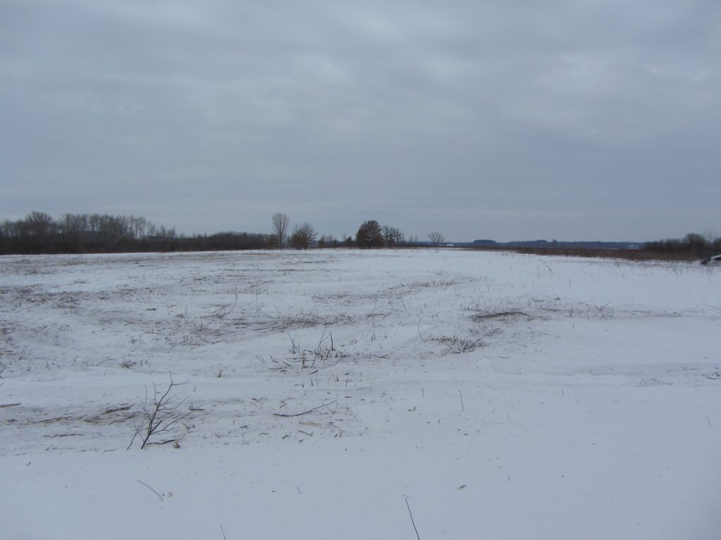Faville Prairie after invasive removal Feb2018