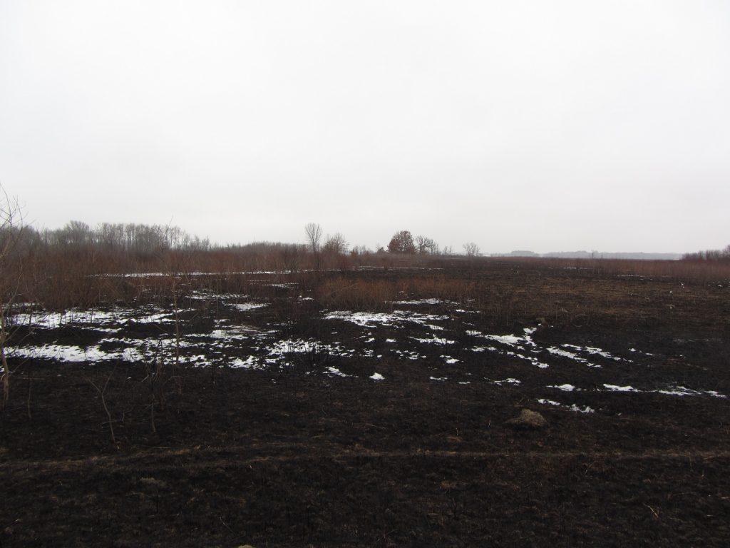 Faville Prairie prior to restoration Jan 2018