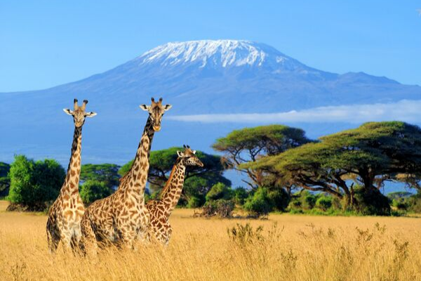The Wonders of Africa