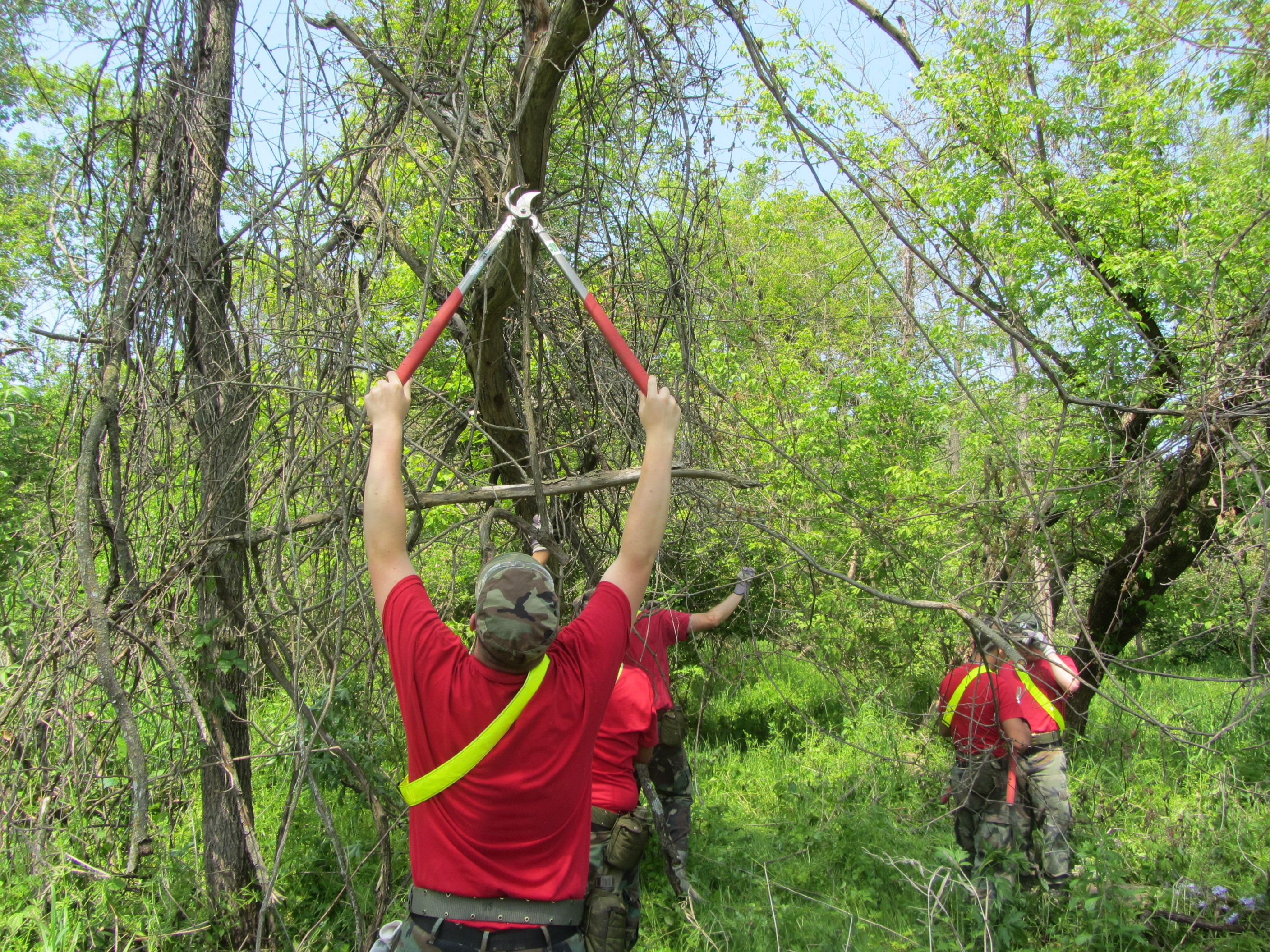 Volunteers work to trim plants at the Mississippi Valley Conservancy