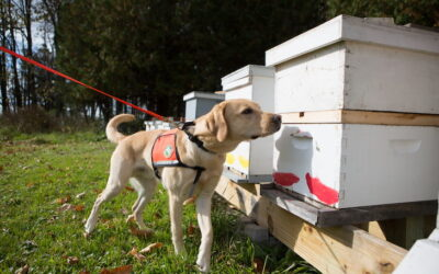 Conservation Dogs Lend a Paw in Bumble Bee Surveys