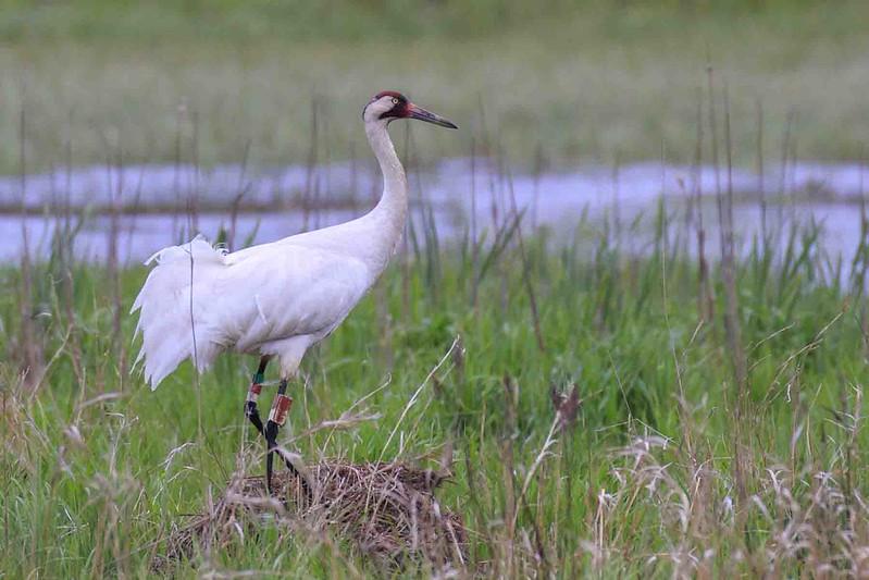 William Floyd Cairns Birds of the Lower Wisconsin Riverway Conservation Fund