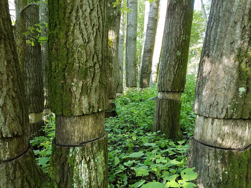 Trees for the Future in Jefferson County Parks Fund