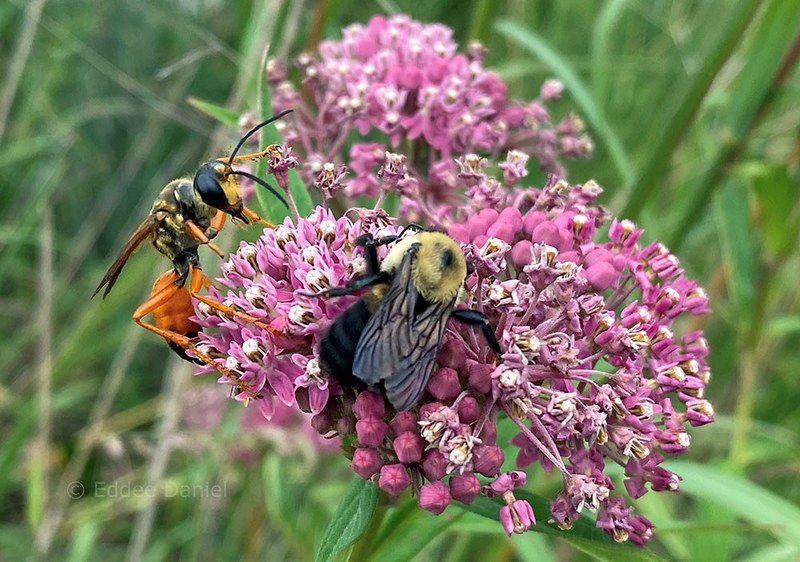 Wisconsin Pollinator Protection Fund