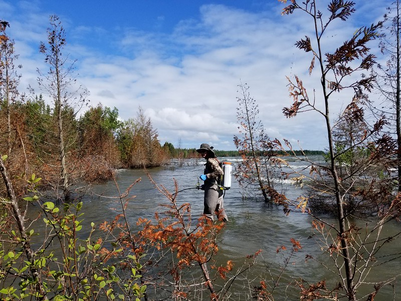 Jonathan Pell Ela Fund for Baileys Harbor Boreal Forest State Natural Area