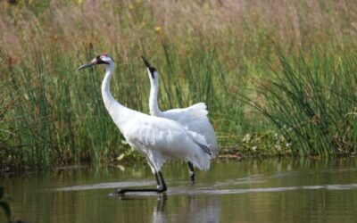 2021 Bird Protection Fund Projects