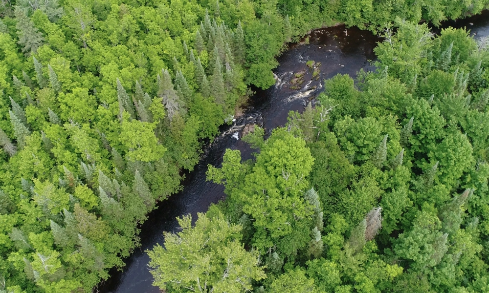 Preserving Wisconsin's Iconic Northwoods: Tyler Forks Community Forest
