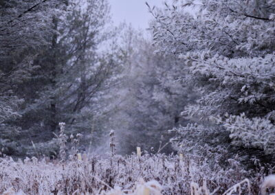 Wisco Winter Wonderland! Virtual Happy Hour